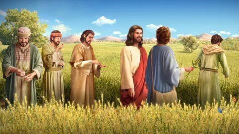主イエス,主イエスの弟子,聖書物語