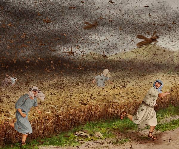 聖書物語ー出エジプト記ー蝗の災い