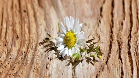 苦難を経験するのは、美しく咲くためである