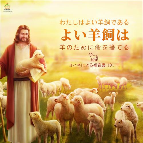 聖句カード,ヨハネによる福音書,よい羊飼