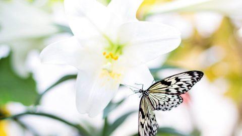 聖書の名言-イースター(復活祭)を祝うことについての17節の聖句