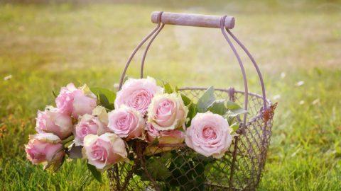 ソロモン王の知恵:「2つの花籠」から得た御啓示