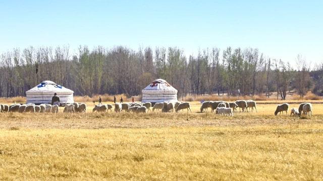牧畜の生活様式